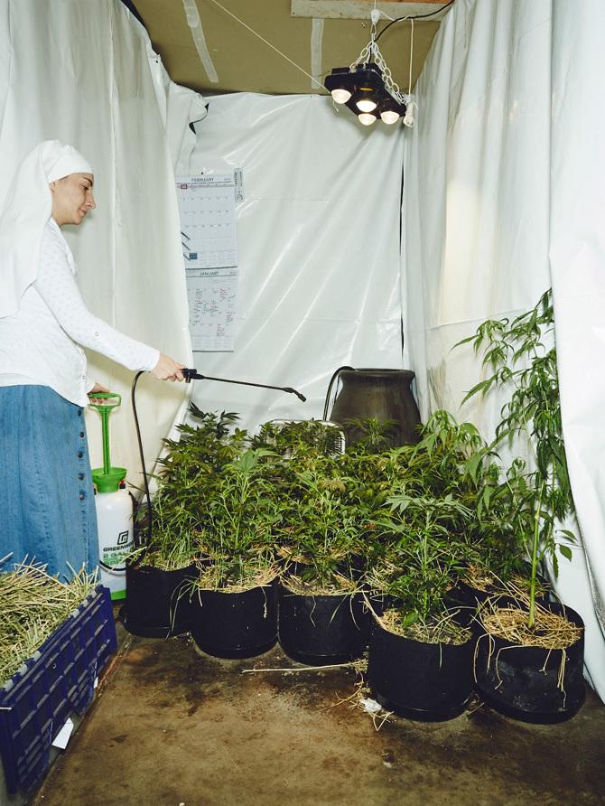 Ces religieuses font pousser du cannabis pour soigner le monde
