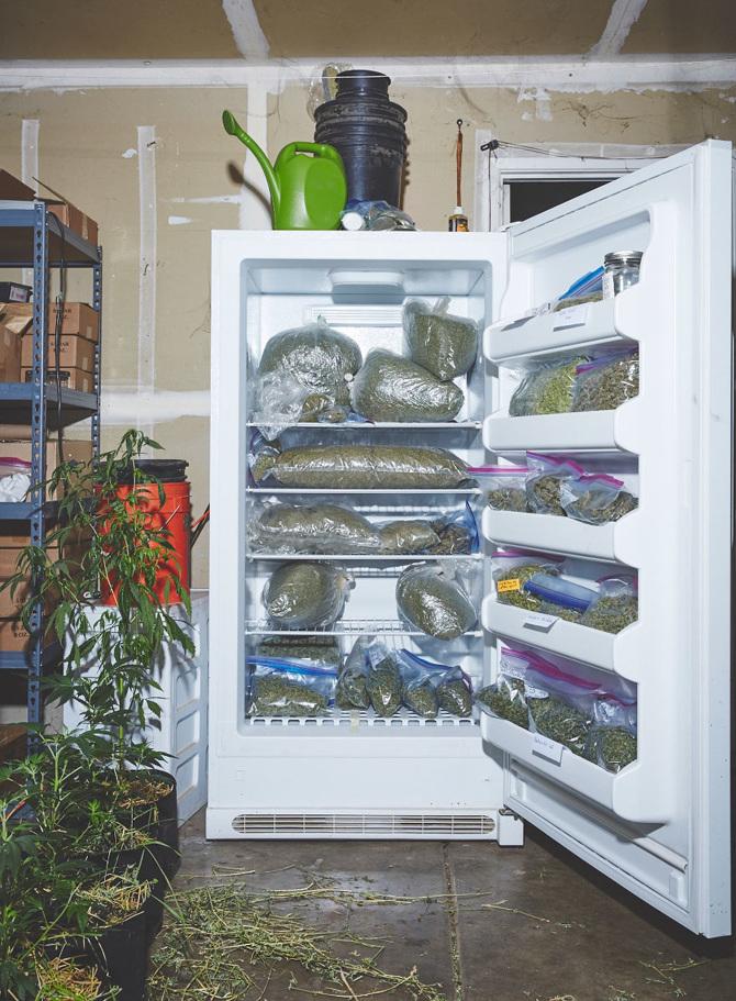 pousser-du-cannabis-3