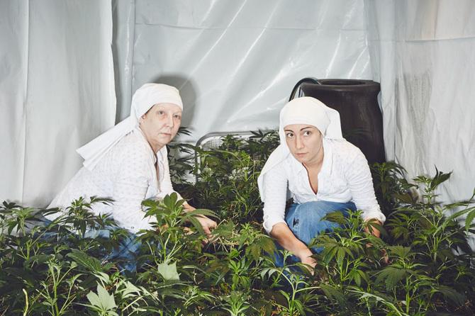 pousser-du-cannabis-5