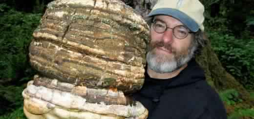 paul-stamets-mushrooms-520x245