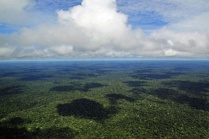 foret-amazonienne