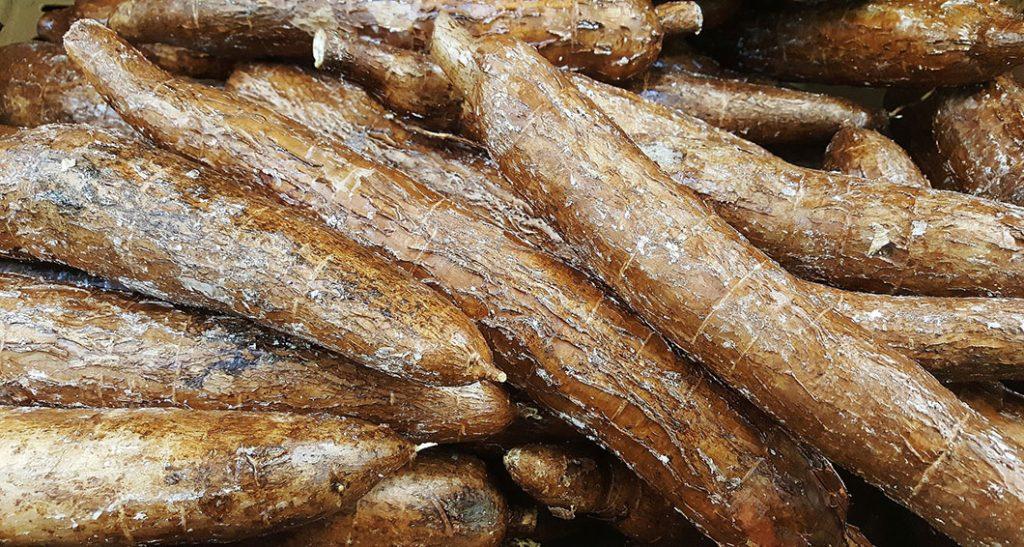 manioc-marron-1024x547