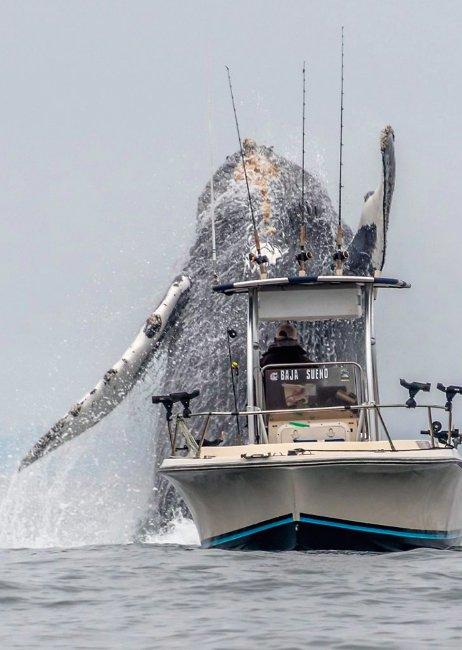 whale2