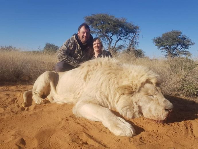 cadavre de lion
